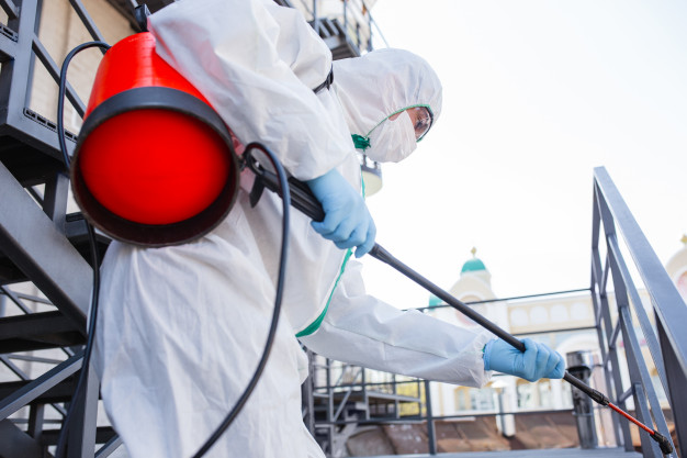 Top 4 questions to ask before choosing a mold removal service
